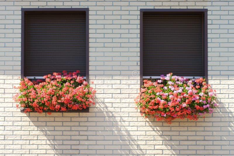 开花窗台 库存照片