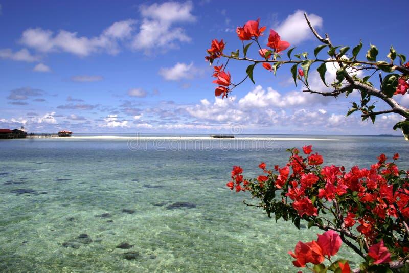 开花红色礁石 图库摄影