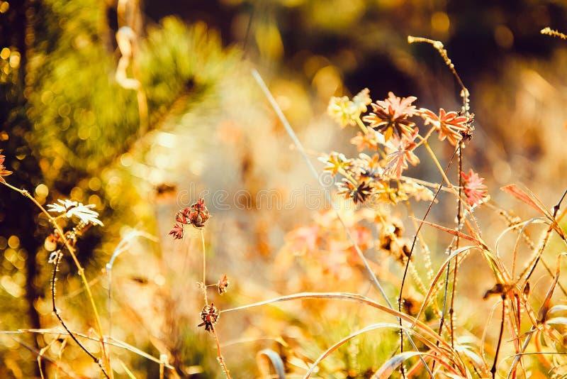 开花花园夏天 夏令时 晴朗明亮的日 温暖的天气 库存图片