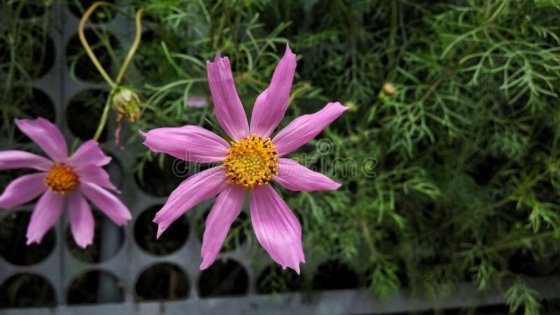 开花花园夏天 图库摄影