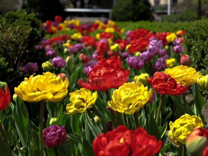 开花花在纽约(颜色) 免版税库存图片