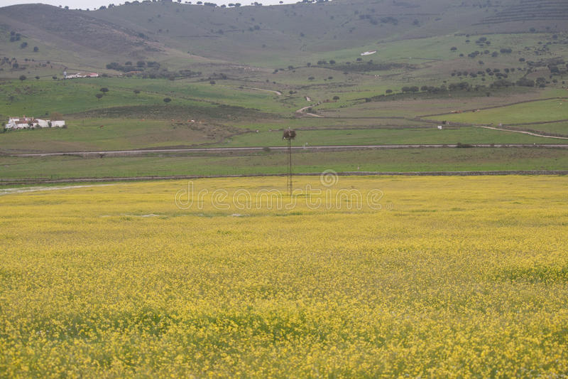 开花草甸黄色 库存照片