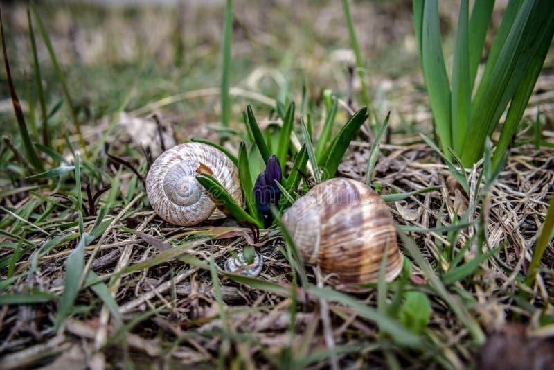 开花蜗牛 库存照片
