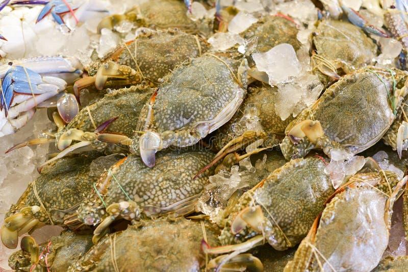 开花螃蟹,青蟹,蓝色游泳者螃蟹,马螃蟹 免版税库存图片