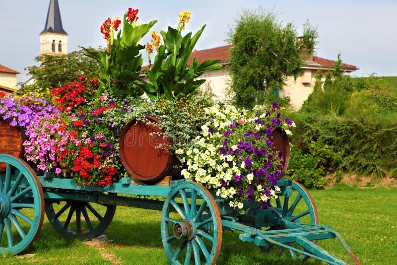 开花被显示的酒推车在葡萄收获在法国的博若莱红葡萄酒地区 免版税库存图片