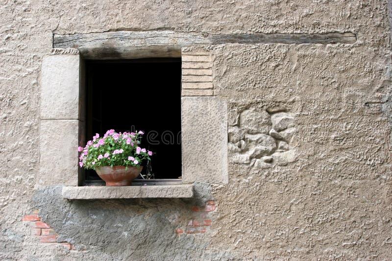 开花视窗 图库摄影