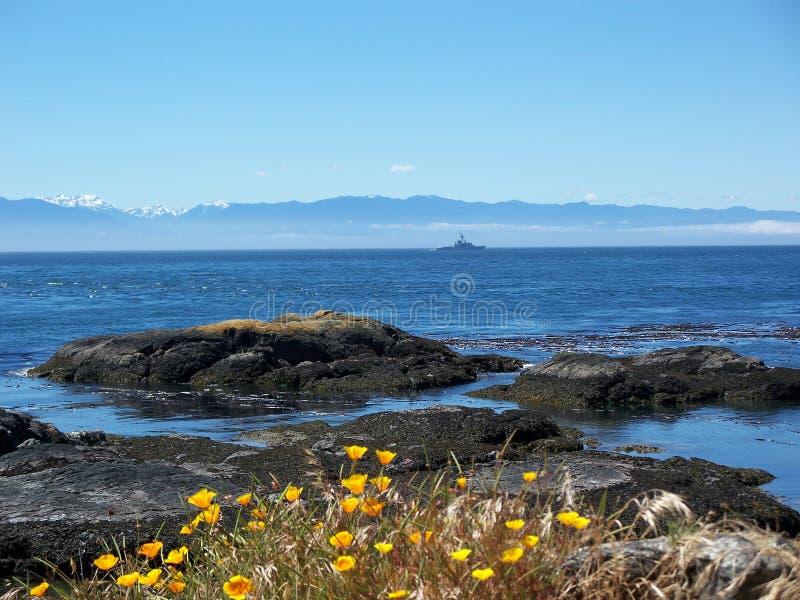 开花通配海洋的岩石 库存图片