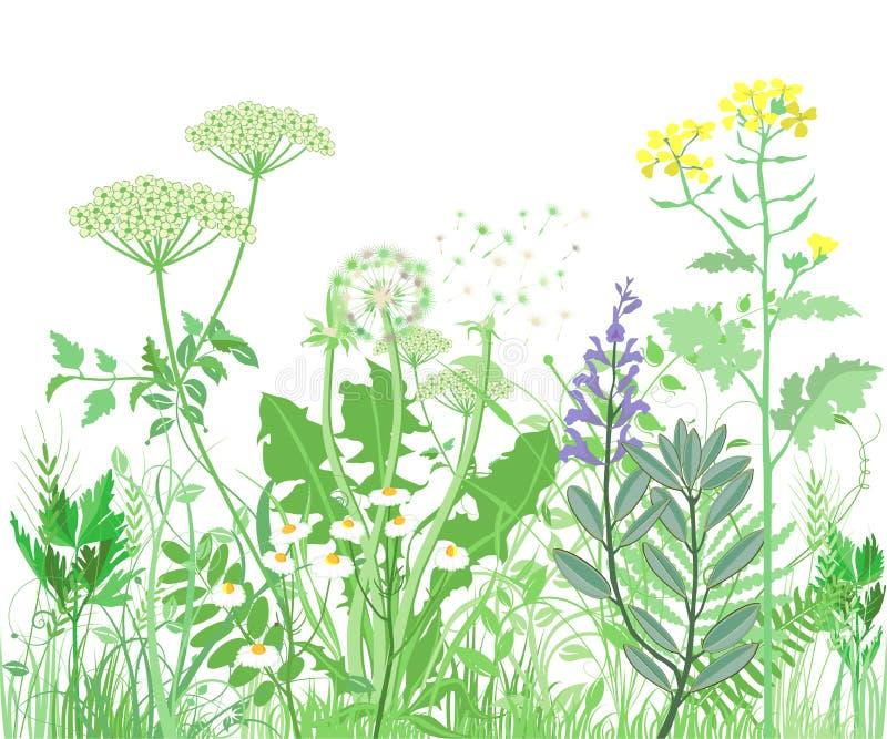 开花通配的草本 向量例证