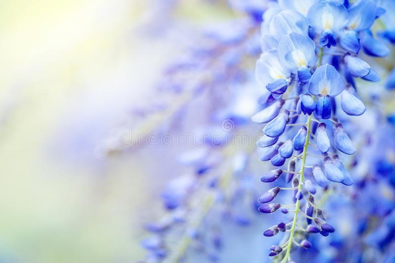 开花-淡紫色花,花卉背景 在软的样式的桃红色花背景的 图库摄影
