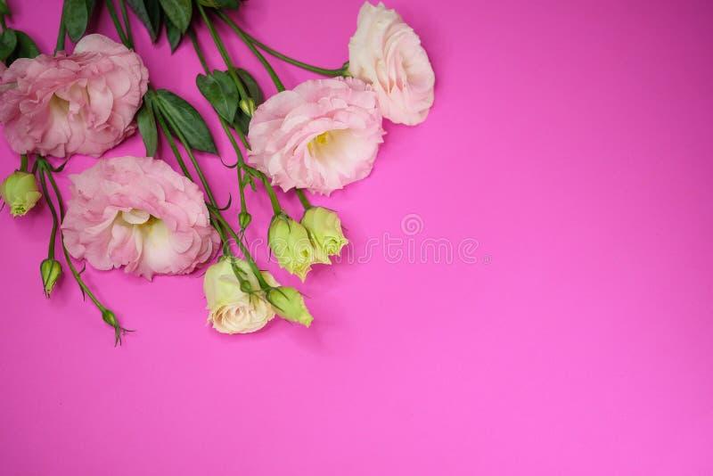 开花lisianthus粉红色 库存照片