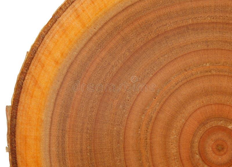 异乎寻常的木纹理 库存图片