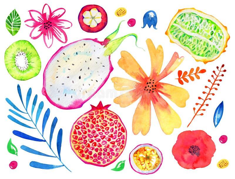 异乎寻常的果子和装饰花 石榴,猕猴桃,pitahaya,西番莲果,kiwano,山竹果树 手拉的水彩集合 库存例证