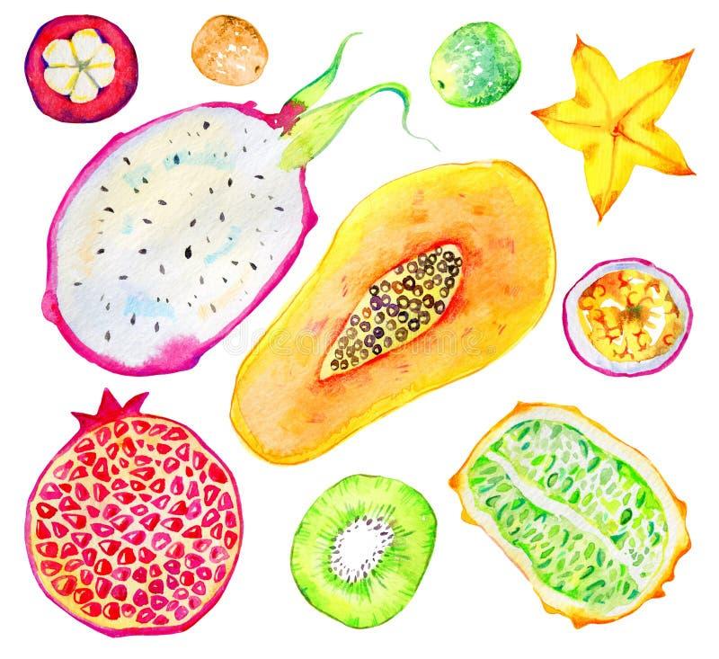 异乎寻常的果子 番木瓜,石榴,猕猴桃,pitahaya,西番莲果,阳桃,山竹果树 手拉的水彩集合 向量例证