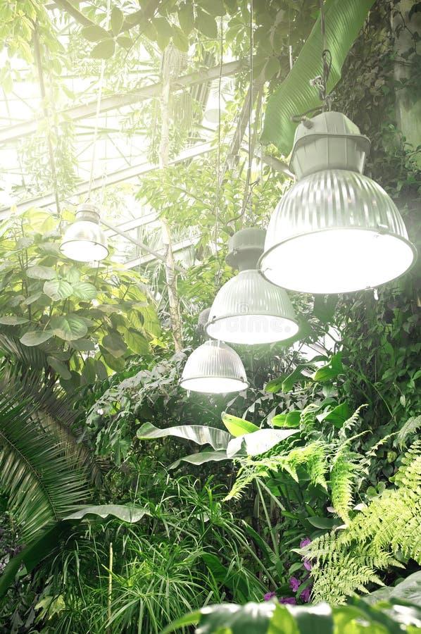 异乎寻常的植物在橘园 热带植物汇集 E 莫斯科国立大学植物园Aptekarskiy Ogorod 免版税库存照片
