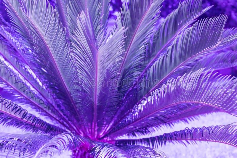 异乎寻常的植物棕榈叶在充满活力的时髦颜色的二重奏紫色蓝色梯度口气关闭  概念时尚艺术 ?? 免版税库存图片