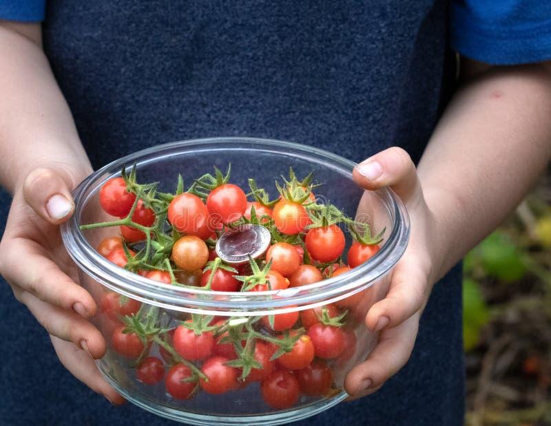 异乎寻常的沼泽地蕃茄 库存照片