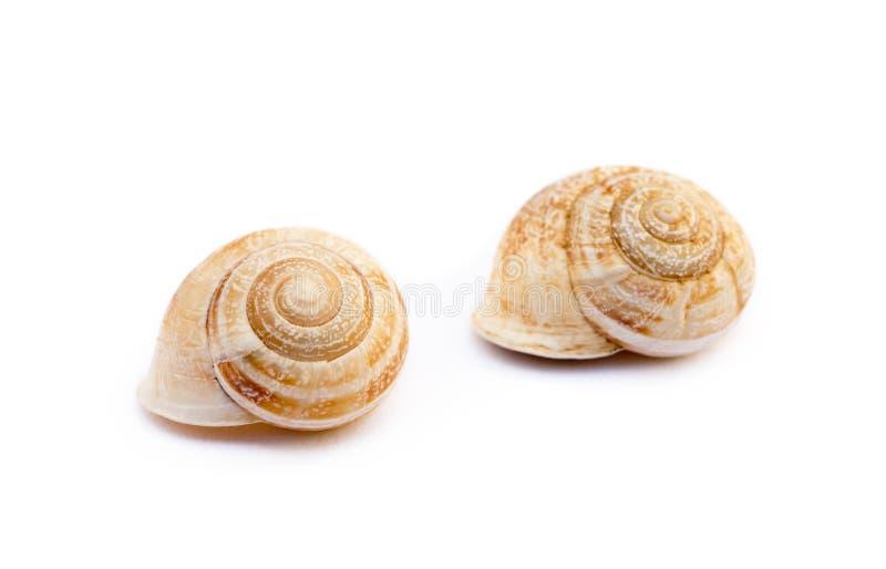 异乎寻常的海洋蜗牛 库存照片