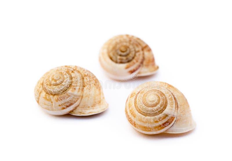 异乎寻常的海洋蜗牛 图库摄影