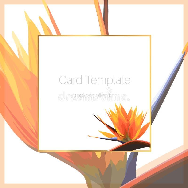 异乎寻常的热带明亮的橙色鹤望兰天堂鸟花 卡片横幅飞行物盖子方形的边界框架模板 皇族释放例证