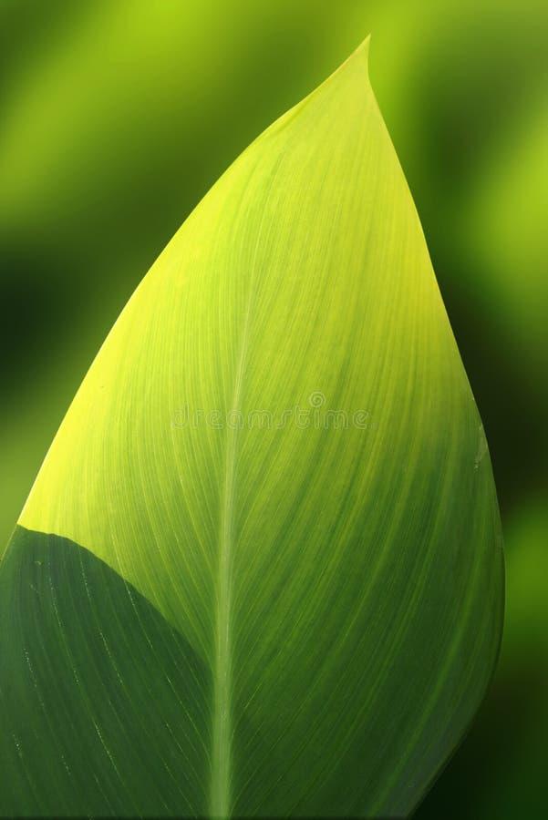 异乎寻常的绿色叶子 免版税库存照片