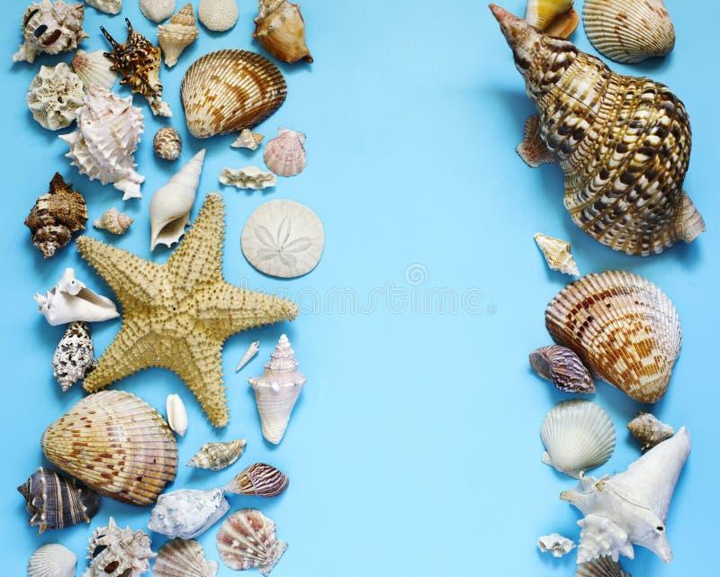 异乎寻常的贝壳和海星汇集舱内甲板在蓝色背景放置 免版税库存照片
