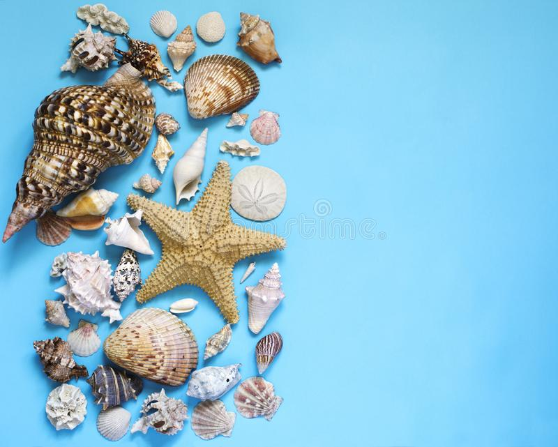 异乎寻常的贝壳和海星汇集舱内甲板在蓝色背景放置 库存照片
