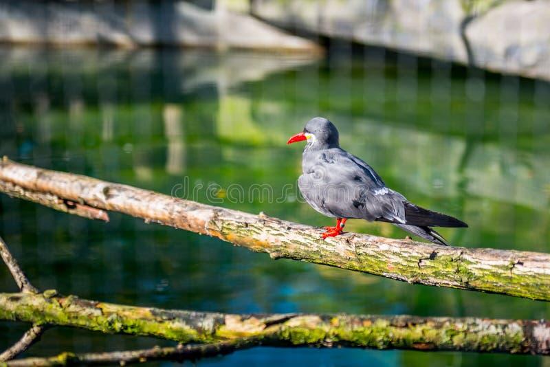 异乎寻常的鸟在动物园密林 库存照片