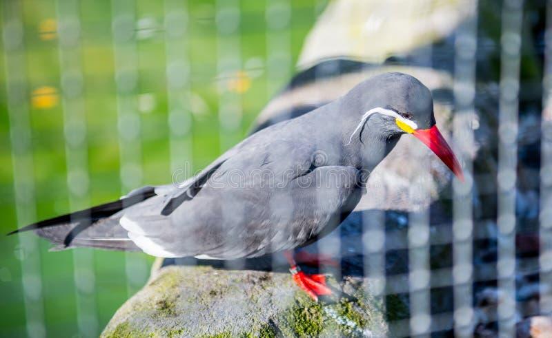 异乎寻常的鸟在动物园密林 库存图片