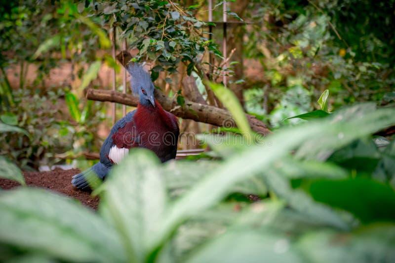异乎寻常的鸟在动物园密林 免版税库存图片
