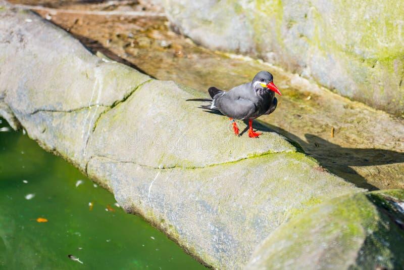 异乎寻常的鸟在动物园里 免版税库存照片