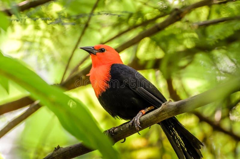 异乎寻常的鸟坐分支 库存图片