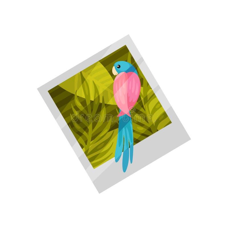 异乎寻常的鹦鹉 在照片的夏天风景 r 向量例证