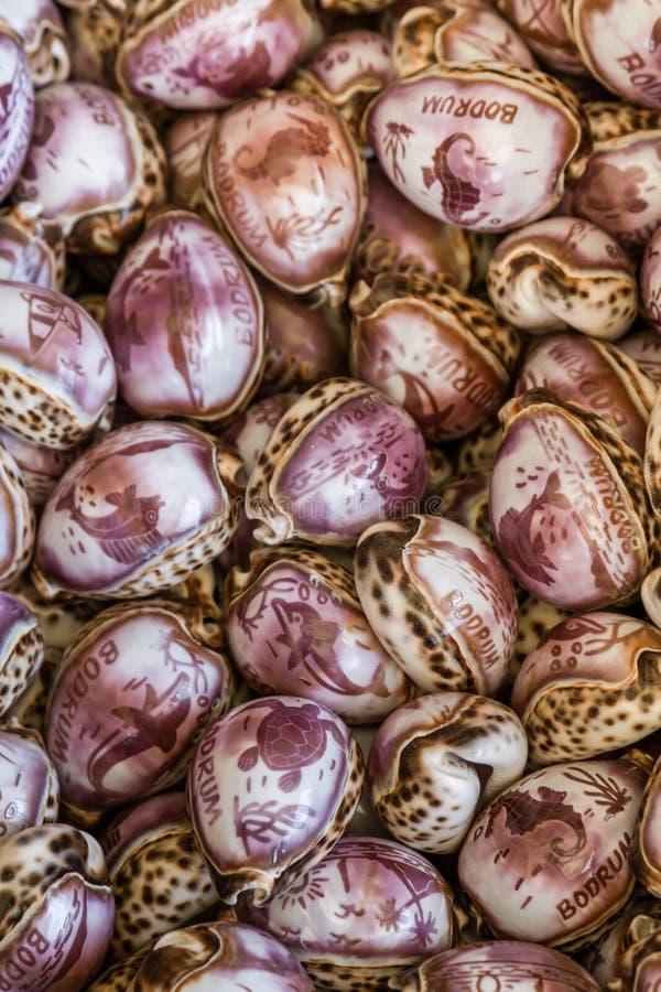 从异乎寻常的一起被堆的贝壳和海扇壳的礼物 免版税库存图片