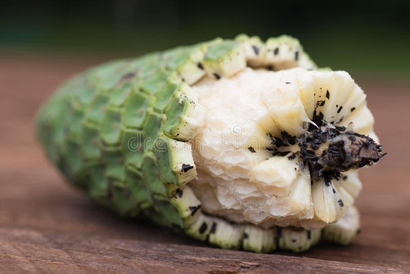 异乎寻常的果子monstera deliciosa在马德拉岛 库存照片