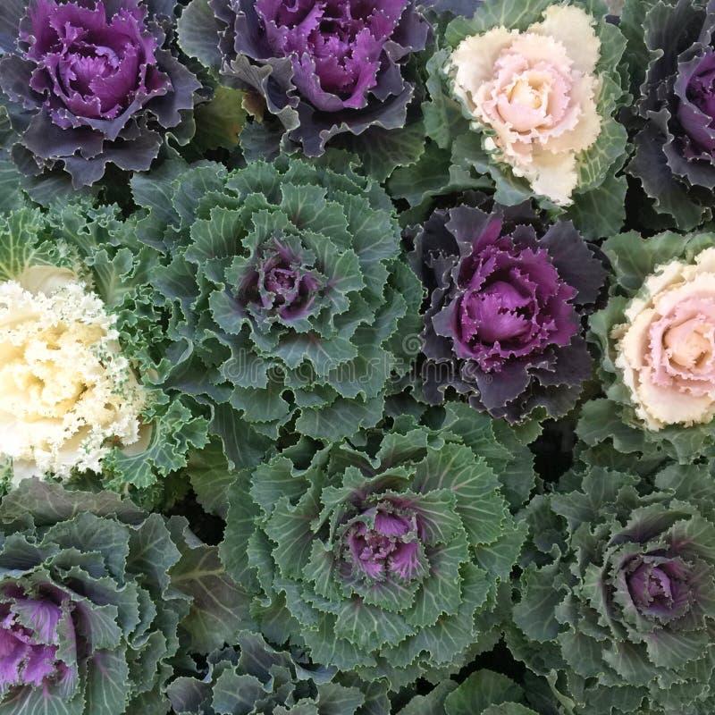 异乎寻常的花的布置花卉构成 免版税库存图片