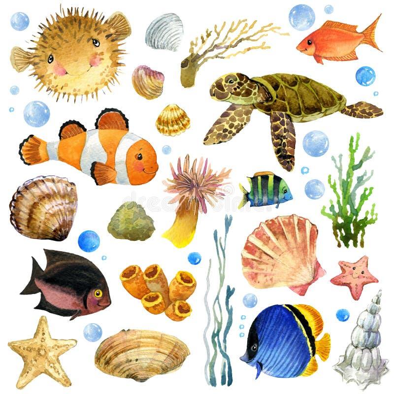 异乎寻常的鱼,珊瑚礁,海藻, 库存例证