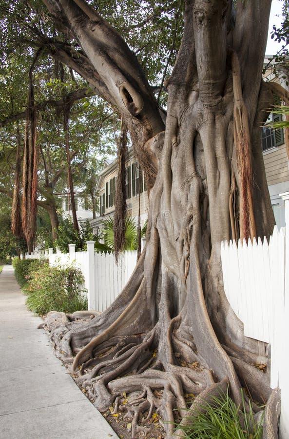 异乎寻常的结构树 图库摄影