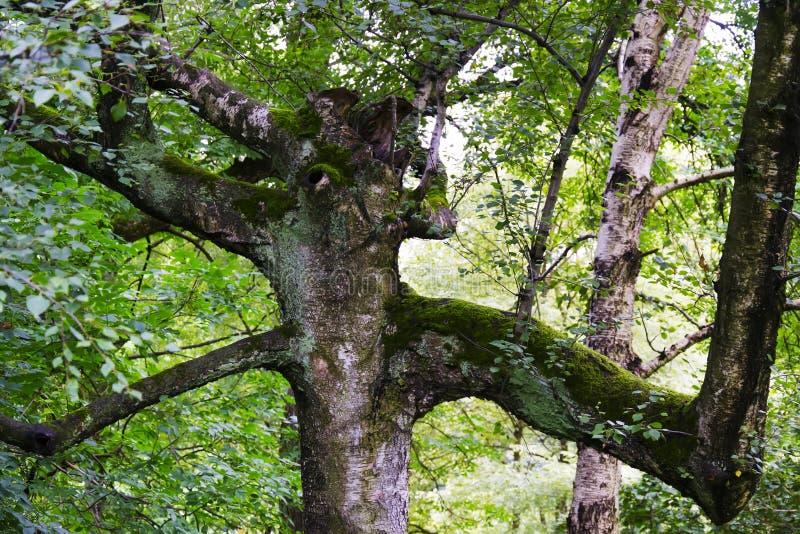 异常的树喜欢恶魔 库存图片