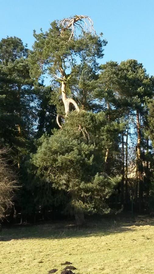 异常的树 库存照片