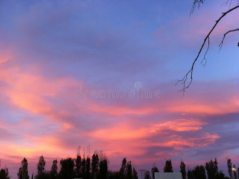 异常的红色天空风景&树 免版税库存图片