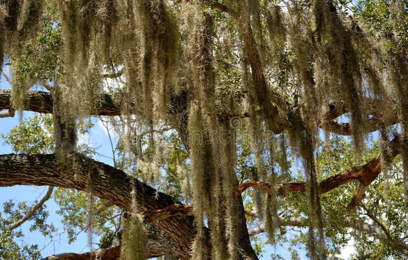 异想天开的树 免版税图库摄影