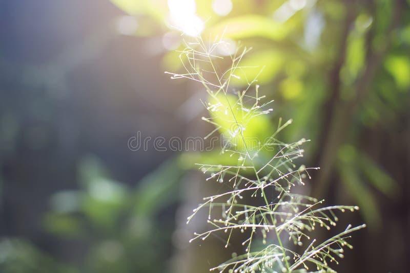 弄脏与太阳光和bokeh树背景的花草 库存照片