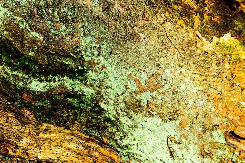 弄脏并且挖坑与质感粗糙的表面老死的木头的木纹理背景特写镜头  库存图片