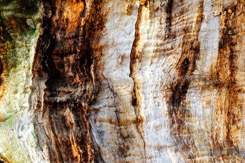 弄脏并且挖坑与质感粗糙的表面老死的木头的木纹理背景特写镜头  库存照片