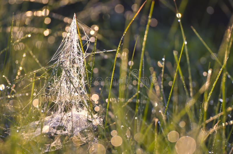 弄脏满地露水的夏天末端草有spiderweb背景 库存照片
