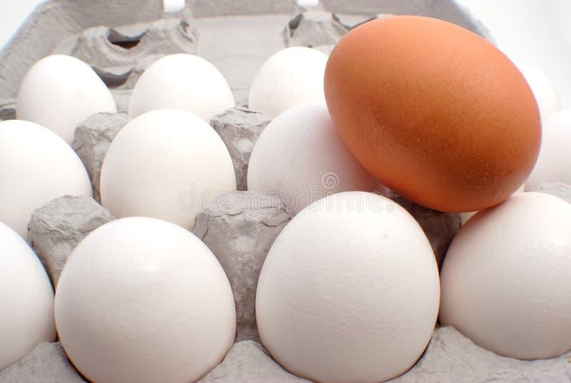 Download 引人注意唯一 库存照片. 图片 包括有 营养, 线索, 农场, 杰出的事物, 唯一, 卵黄质, 健康, 空白, 鸡蛋 - 65200