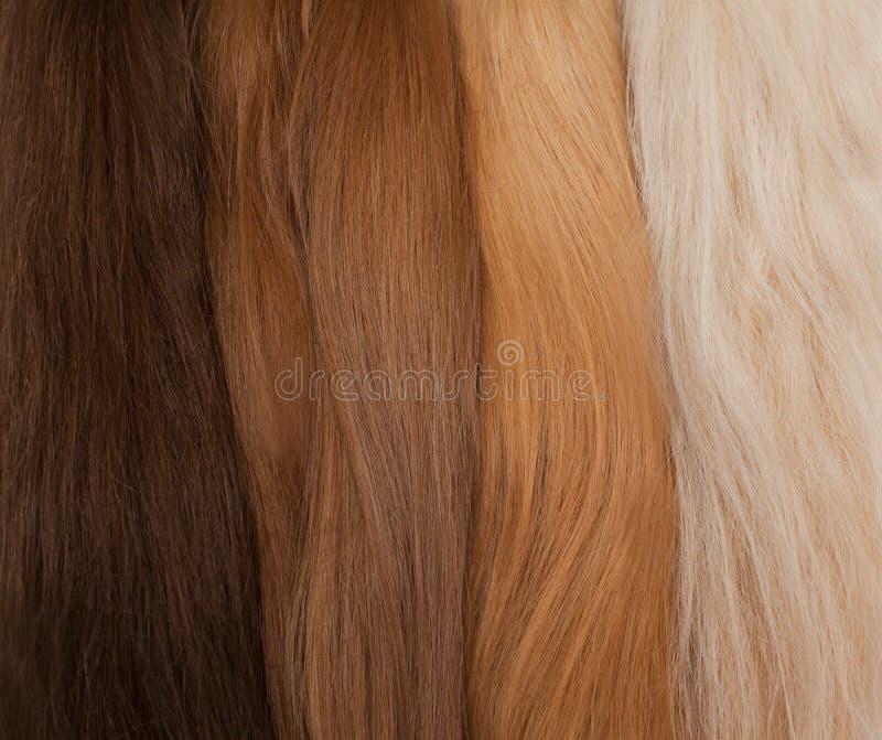 引伸的自然头发 不同颜色从黑色到金发碧眼的女人 免版税库存图片