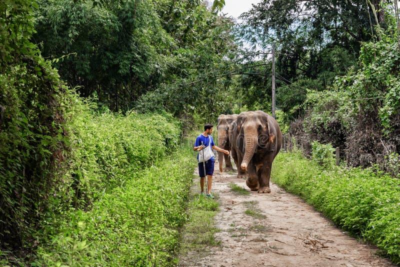 引导在清迈密林道路的年轻人一头大象  免版税库存照片