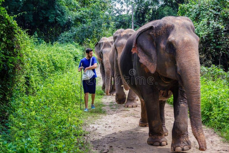 引导在清迈密林道路的年轻人一头大象  免版税库存图片