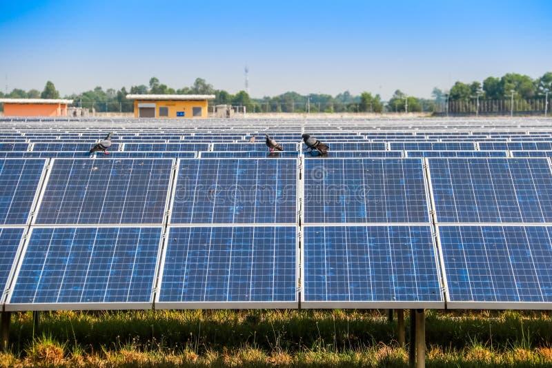 引起电清洁能源的太阳电池板 免版税图库摄影